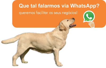 chame no whats!